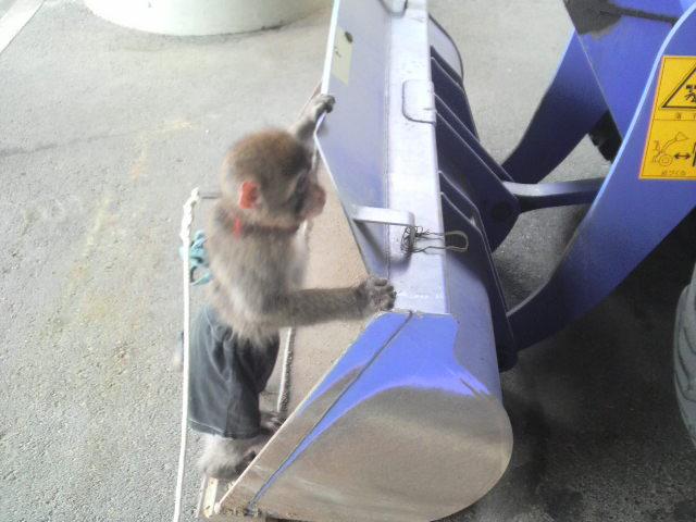 ショベルカーに乗るでござる