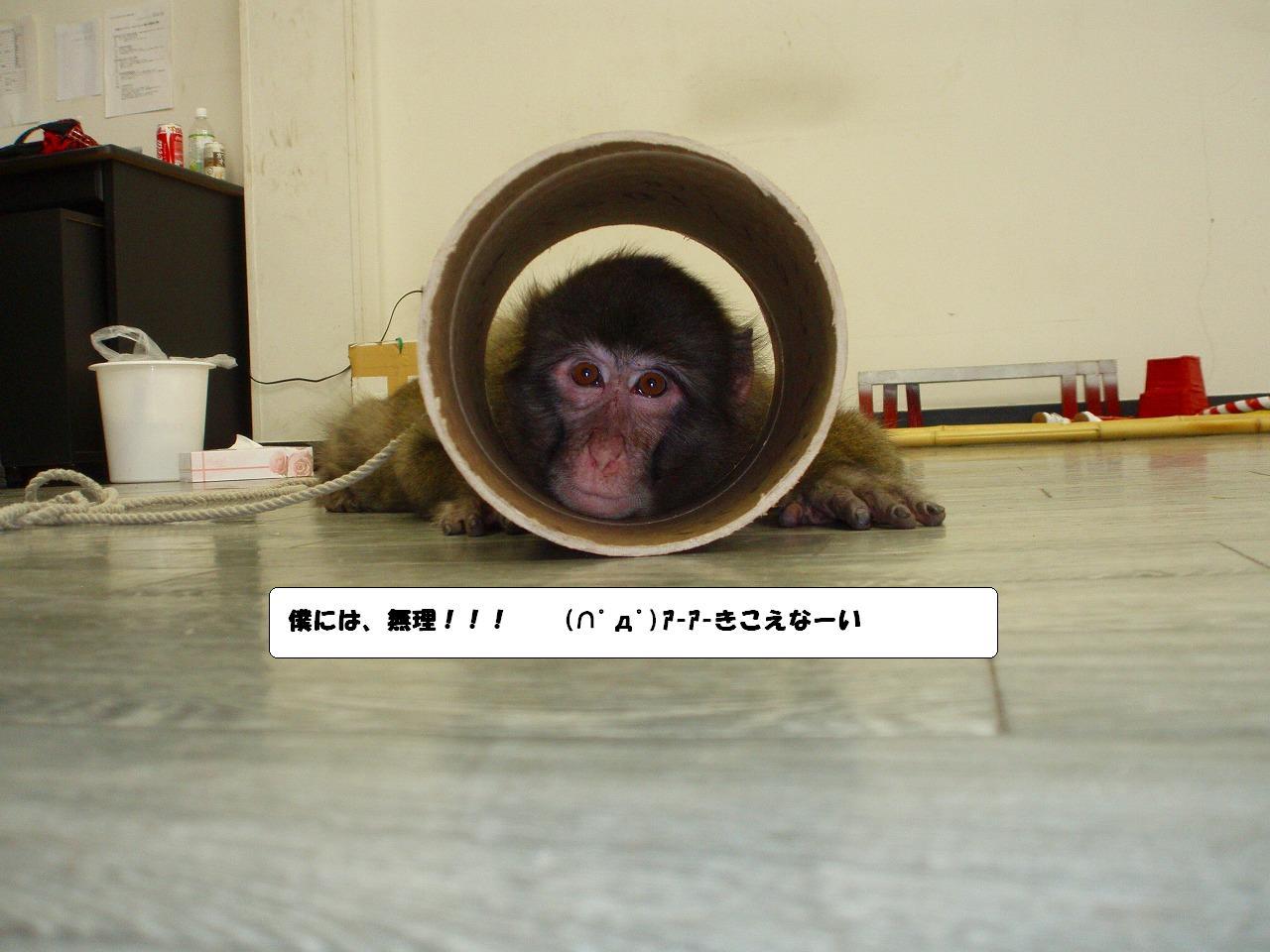 2009_08180016
